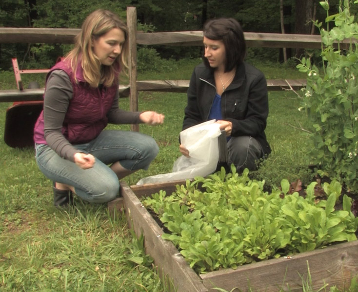 How to Care for Arugula