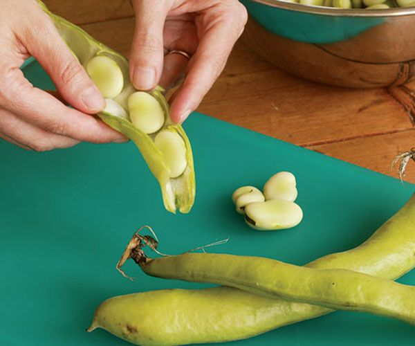 How to shell fava beans1