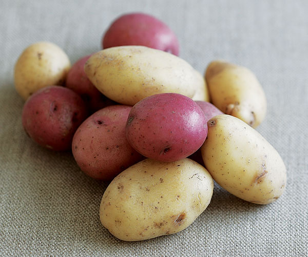 The Right Potato For Every Recipe - Article - FineCooking